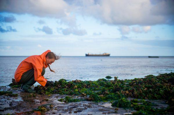 Oesters en kokkels van de Waddenzee