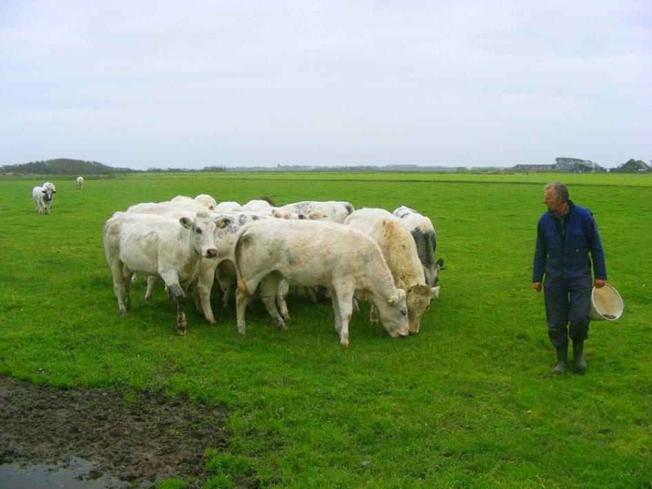 Texels rundvlees